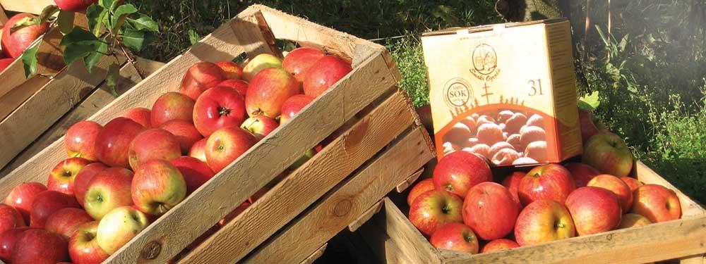 soki-z-jablkami-na-trawie1